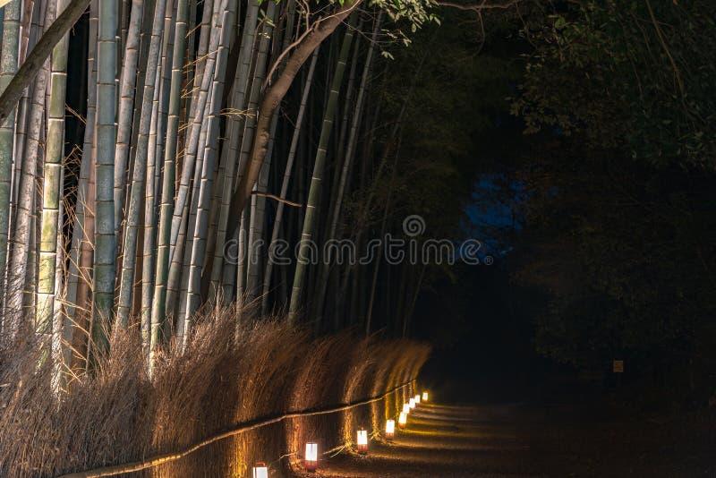 O jardim de bambu do zen do bosque de Arashiyama ilumina-se acima na noite imagens de stock royalty free