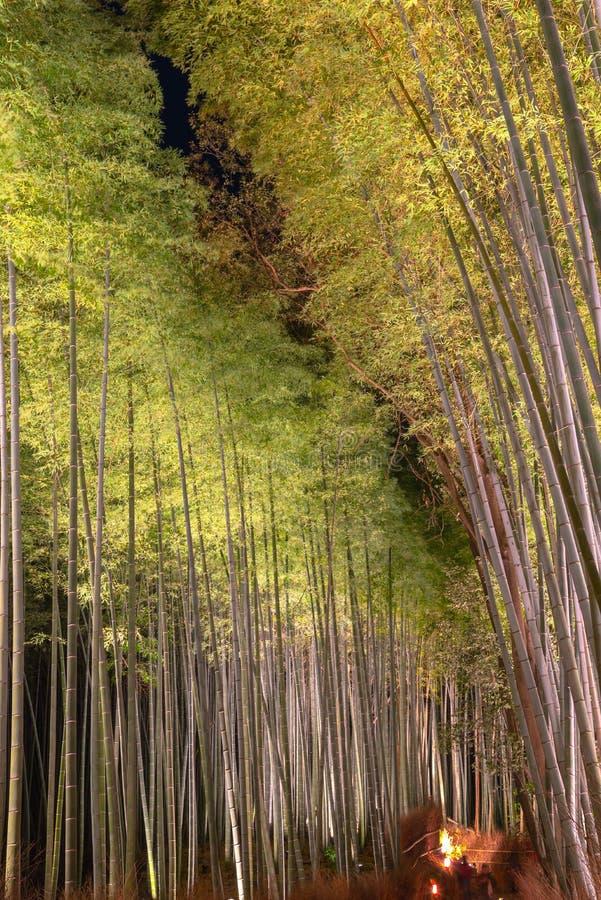 O jardim de bambu do zen do bosque de Arashiyama ilumina-se acima na noite fotos de stock