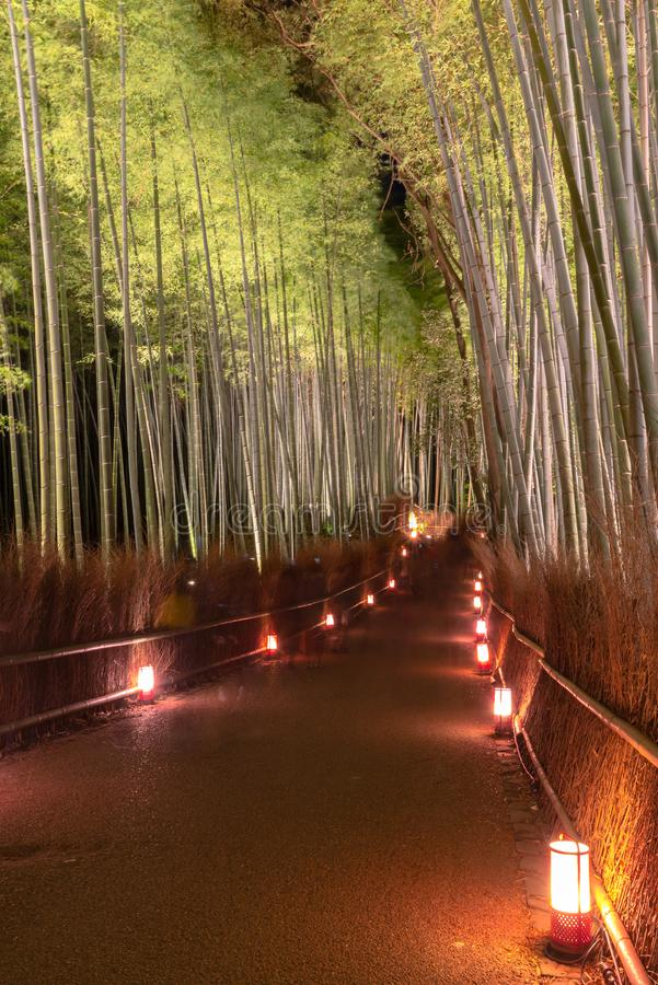 O jardim de bambu do zen do bosque de Arashiyama ilumina-se acima na noite foto de stock royalty free