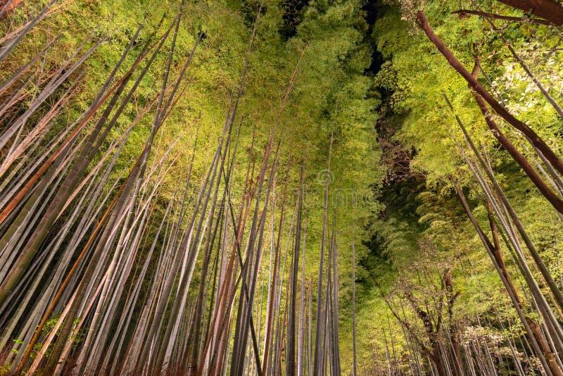 O jardim de bambu do zen do bosque de Arashiyama ilumina-se acima na noite foto de stock