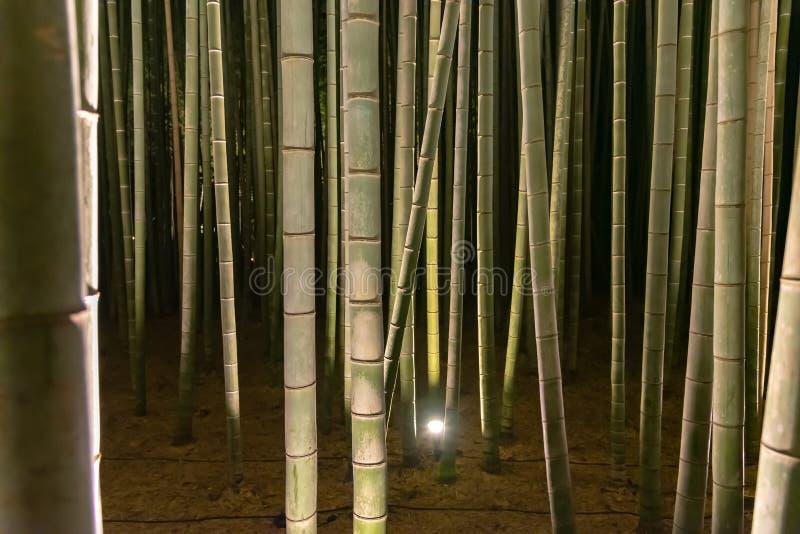 O jardim de bambu do zen do bosque de Arashiyama ilumina-se acima na noite fotografia de stock royalty free
