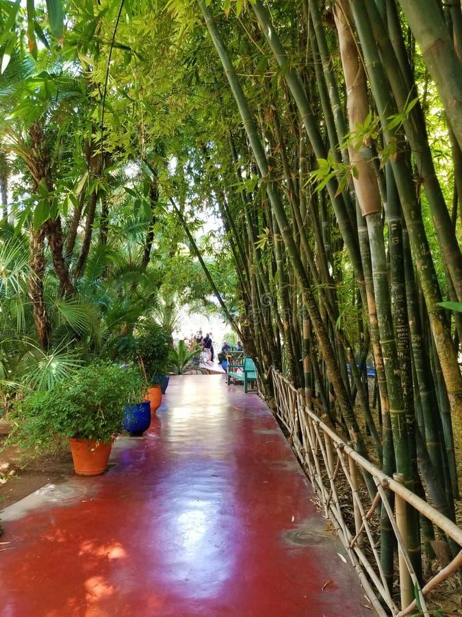 O jardim de Majorelle em C4marraquexe Marrocos fotos de stock royalty free