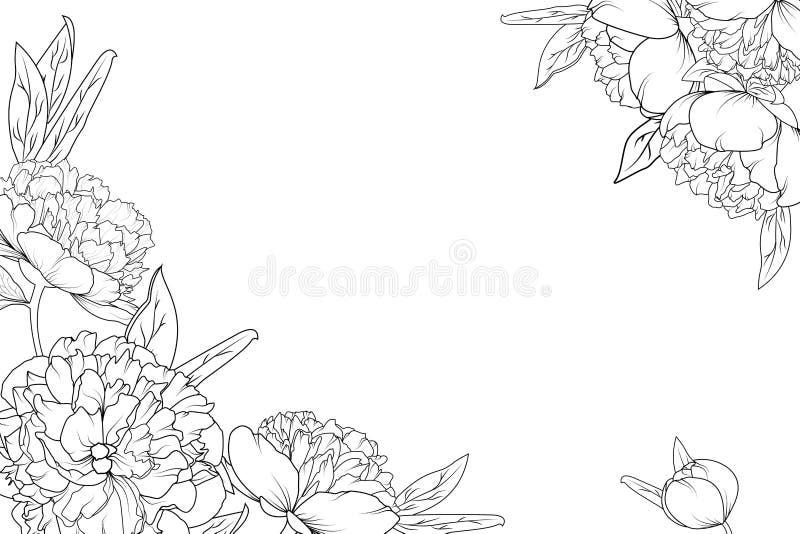 O jardim de rosas da peônia floresce o quadro de canto da beira ilustração royalty free