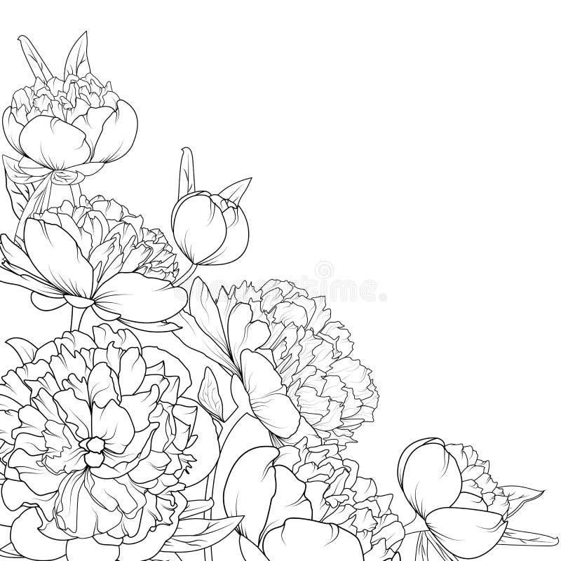 O jardim de rosas da peônia floresce o quadro do canto da composição ilustração do vetor