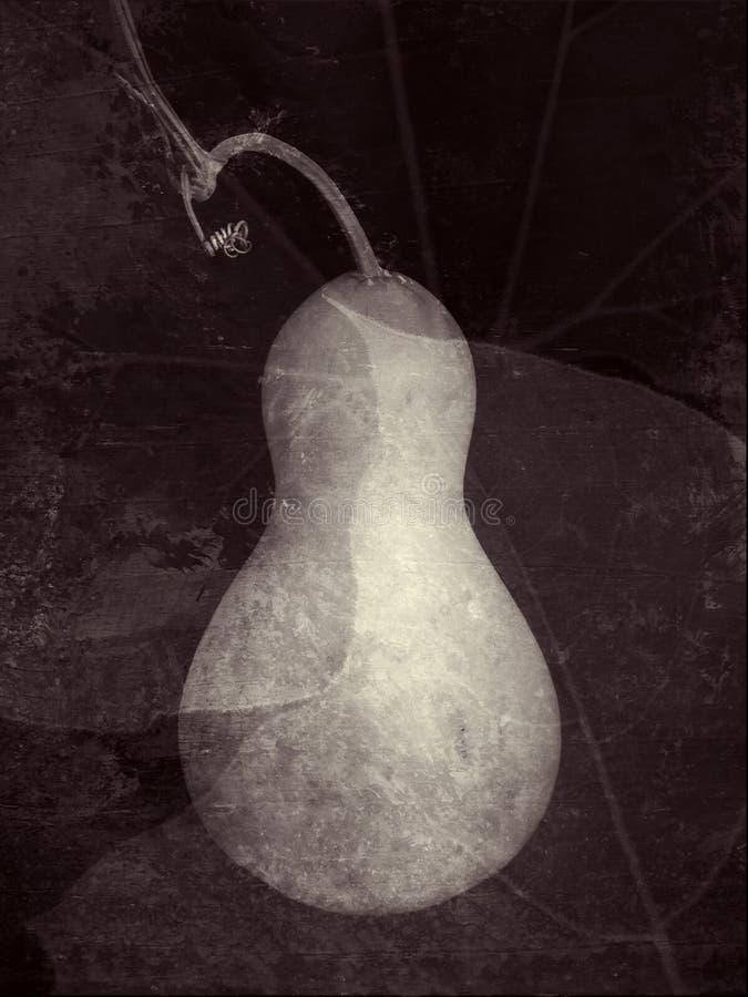 O jardim do Gourd foto de stock royalty free