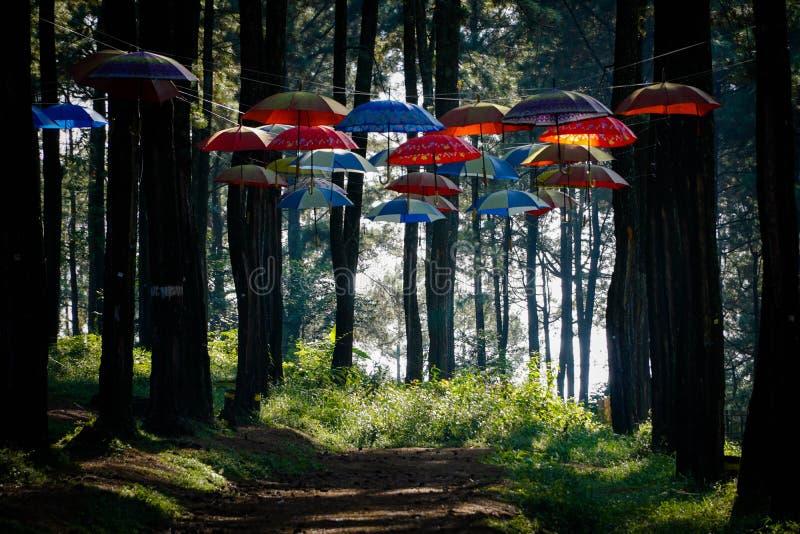 O jardim do guarda-chuva na floresta do pinho no parque de Sikembang, Batang, Java central, Indonésia fotos de stock