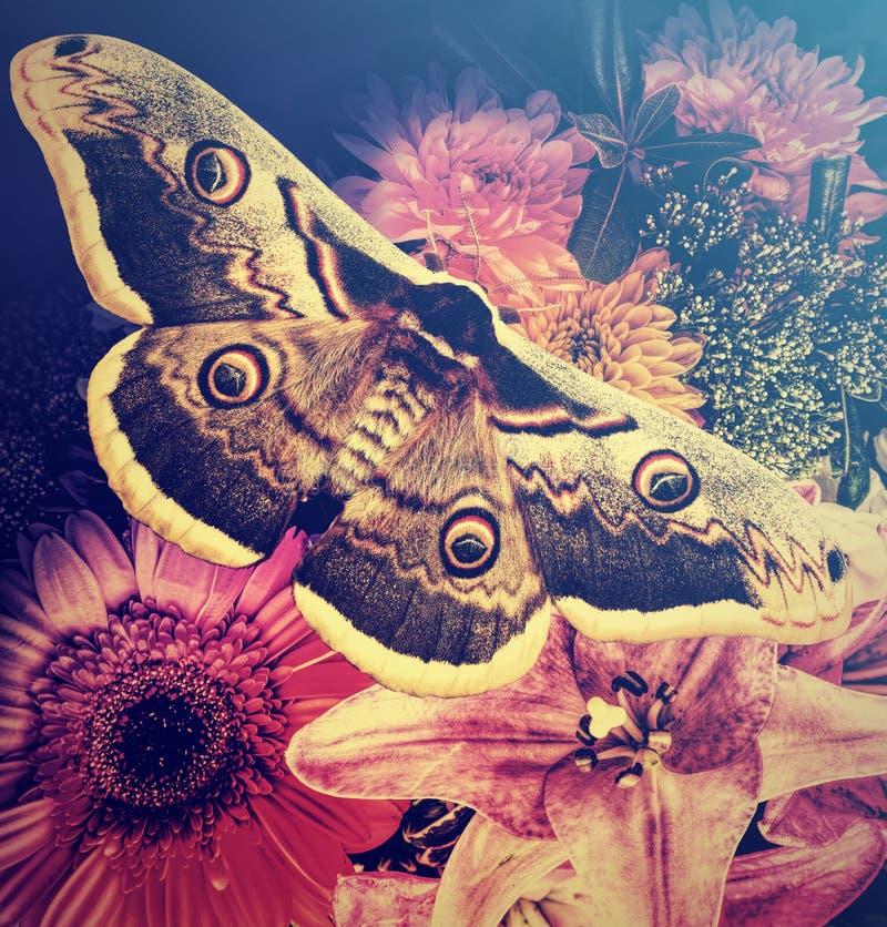O jardim floresce o ramalhete romântico bonito e a borboleta bonita Fundo floral colorido natural imagem de stock
