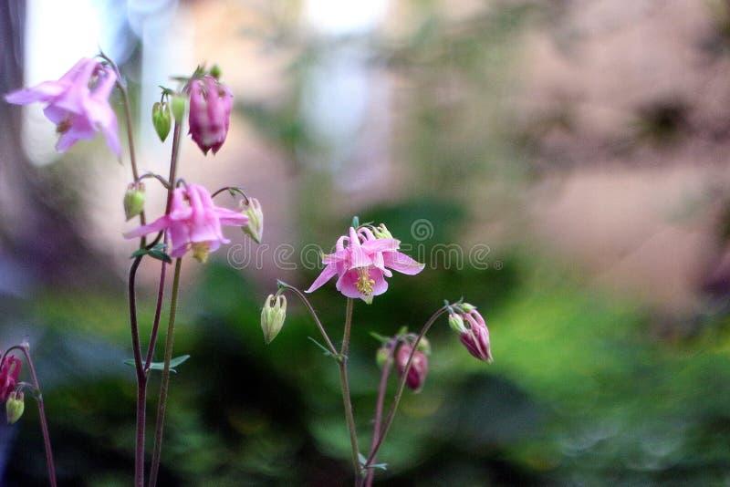 O jardim floresce o verão cor-de-rosa da cor verde da cor foto de stock royalty free