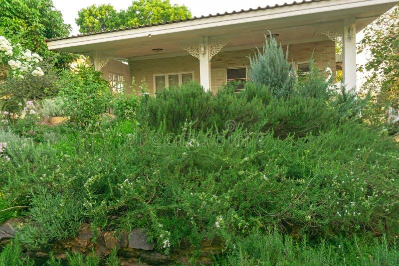 O jardim inglês da casa de campo no quintal de uma casa, paisagem infomal decora com rosas, erva dos alecrins, alfazema, planta  imagem de stock