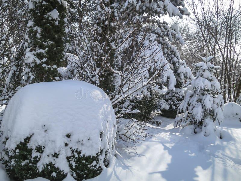 O jardim inteiro é coberto com uma camada grossa de neve fotos de stock royalty free