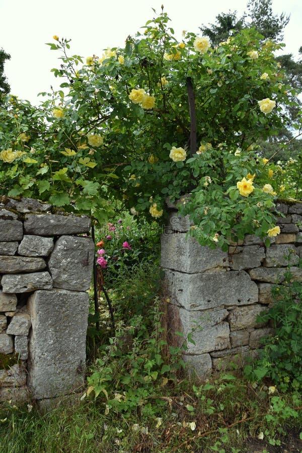 O jardim secreto belamente de florescência POPENHAUSEN das flores foto de stock royalty free