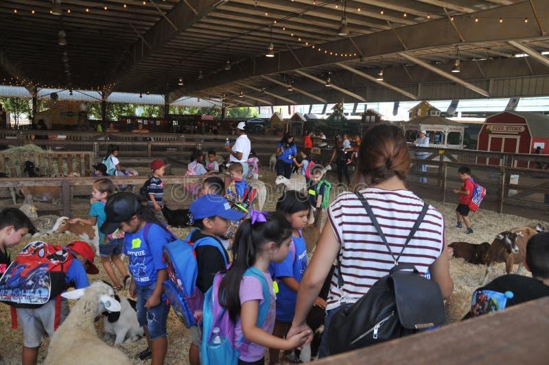 O jardim zoológico de trocas de carícias na exibição da EXPLORAÇÃO AGRÍCOLA no Los Angeles County justo em Pomona foto de stock royalty free