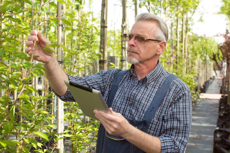 O jardineiro adulto na loja do jardim inspeciona plantas As mãos que guardam a tabuleta Nos vidros, uma barba, macacões vestindo  imagens de stock royalty free
