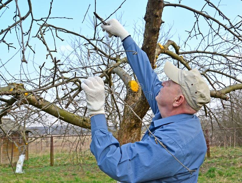 O jardineiro corta ramos da Apple-?rvore com secateurs A mola funciona em um jardim imagem de stock