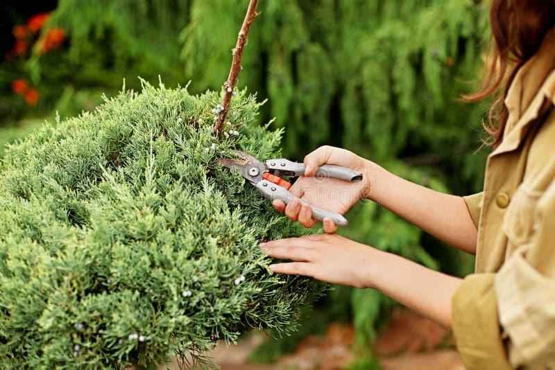 O jardineiro da menina na roupa de funcionamento e no chapéu de palha corta as tesouras do jardim sempre-verdes fotos de stock