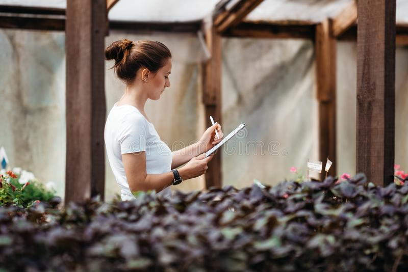 O jardineiro f?mea que inspeciona flores cultiva dentro da estufa imagem de stock royalty free