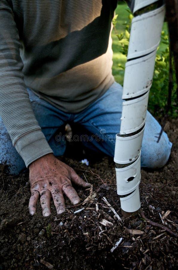 O jardineiro planta uma árvore imagens de stock