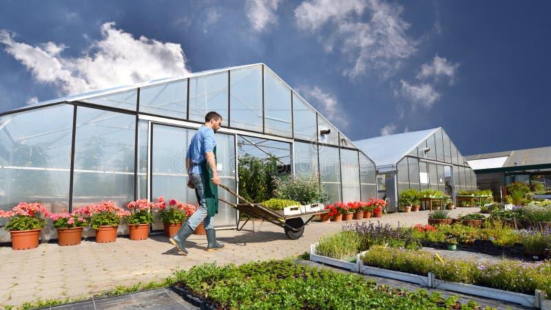 O jardineiro trabalha em um berçário - crescendo e vendendo plantas e flo fotografia de stock
