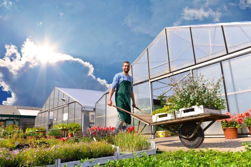 O jardineiro trabalha em um berçário - crescendo e vendendo plantas e flo imagem de stock royalty free