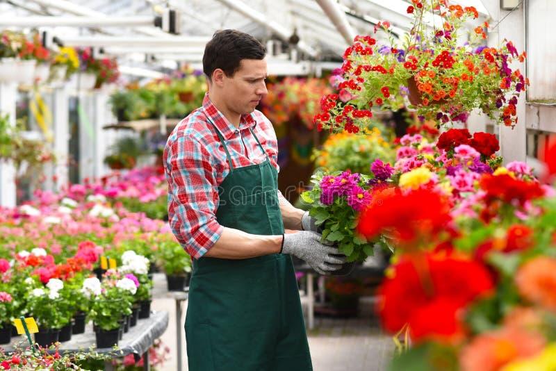 O jardineiro trabalha em uma estufa de um florista imagens de stock royalty free