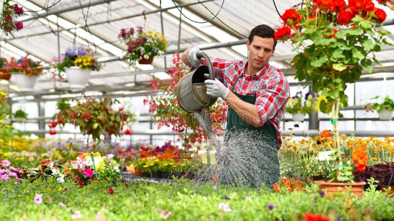 O jardineiro trabalha em uma estufa de um florista - molhar o p fotografia de stock