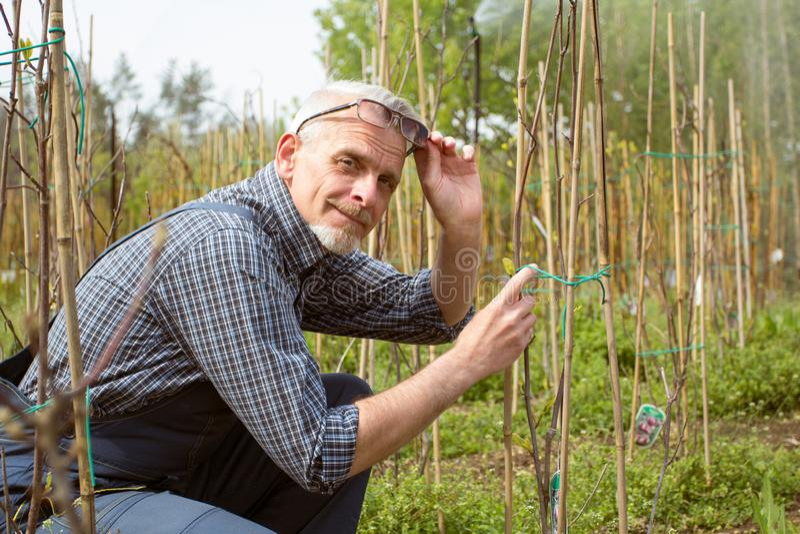 O jardineiro trata plantas novas Sorrisos, descolados seus vidros imagens de stock royalty free
