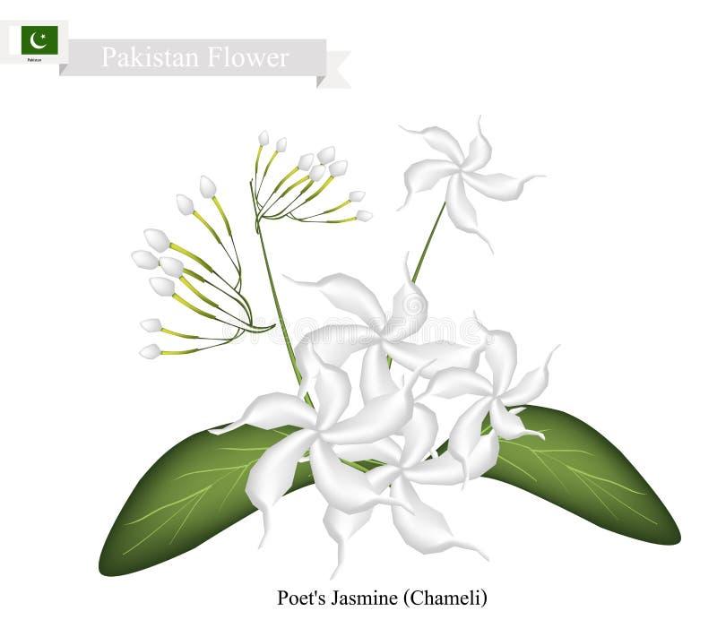 O jasmim do poeta, a flor nacional de Paquistão ilustração do vetor