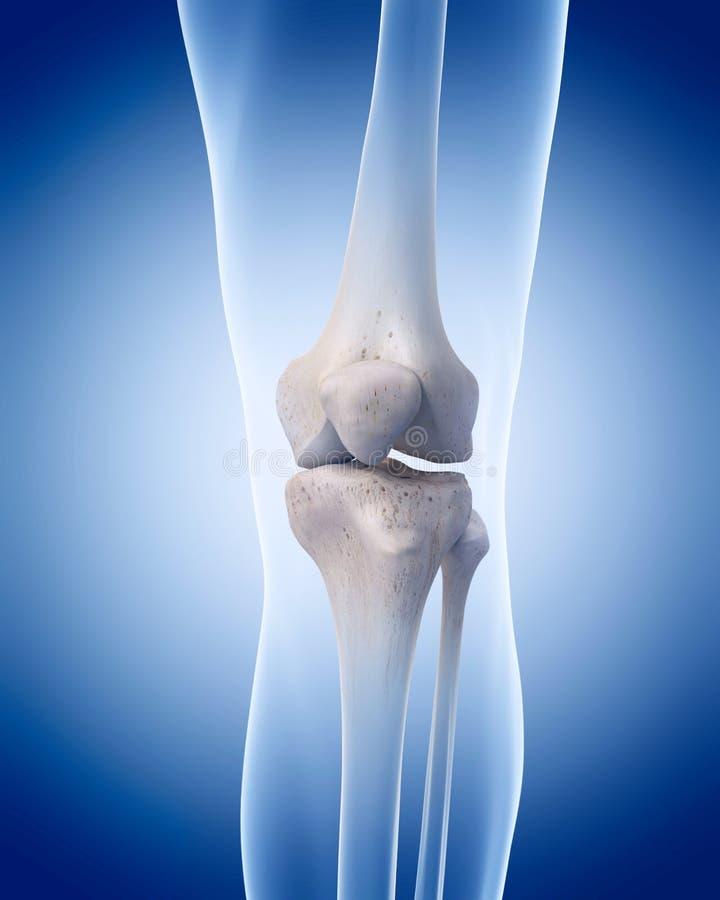 O joelho ilustração stock
