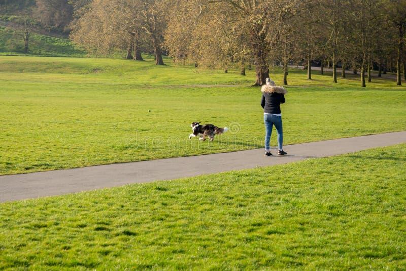 O jogo da mulher busca a bola com seu cão de border collie no parque fotografia de stock royalty free