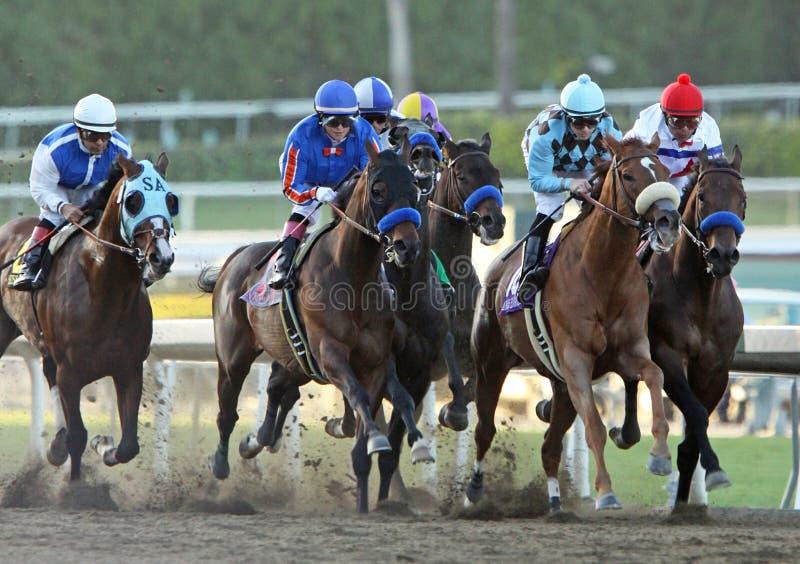 O jogo no gajo ganha a desvantagem de Santa Anita imagens de stock royalty free