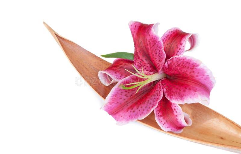O jogo roxo da flor do lírio em um Coco secado folheia, isola imagem de stock royalty free
