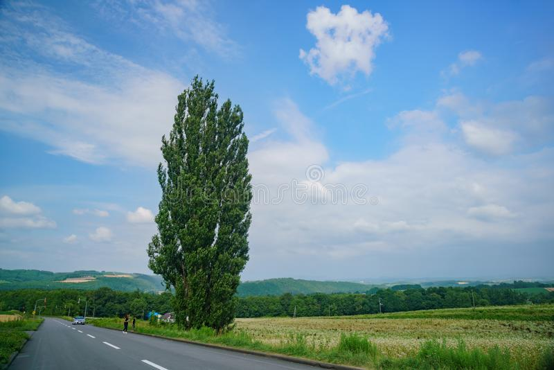 O Ken & Mary Tree famosos imagem de stock royalty free
