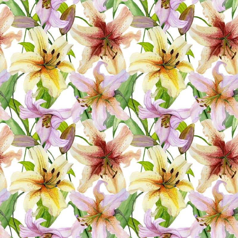 O lírio bonito floresce com as folhas no fundo branco Teste padrão floral sem emenda Pintura da aguarela Ilustração pintado à mão ilustração stock