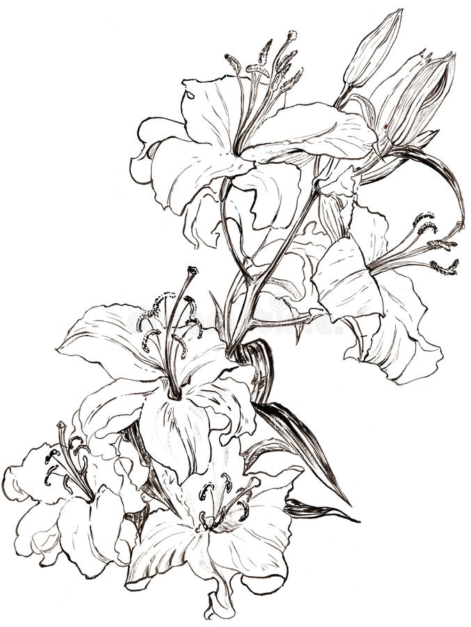 O lírio da ilustração floresce o monochrome ilustração stock
