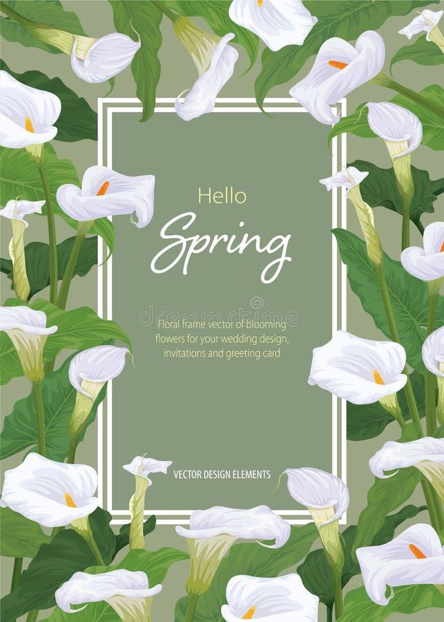 O lírio de Calla floresce o quadro no fundo verde O grupo do vetor de florescência floresce para seu projeto ilustração stock