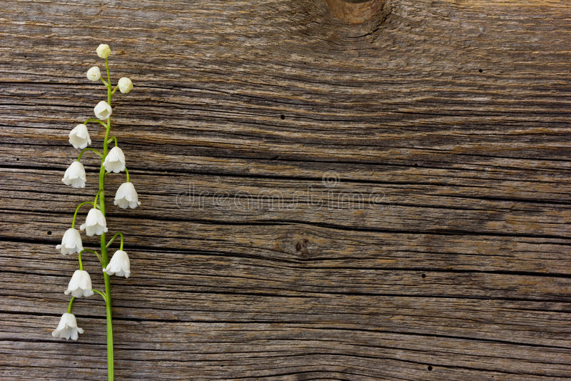 O lírio de flor branca do vale em um fundo da placa cinzenta velha do celeiro racha-se fotos de stock royalty free