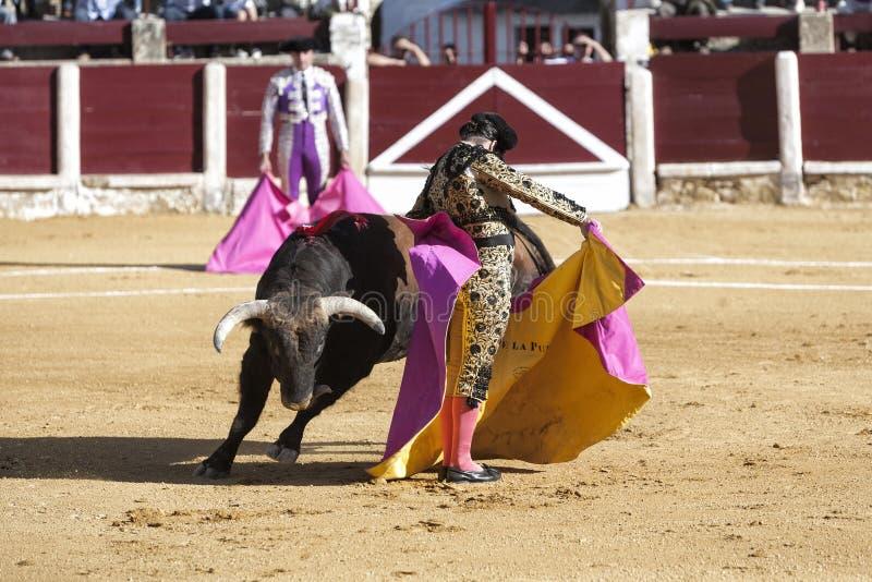 O la espanhol Puebla de Morante de do toureiro com a tourada do capote ou do cabo chamou o chicuelina um touro de quase 600 quilog imagens de stock royalty free