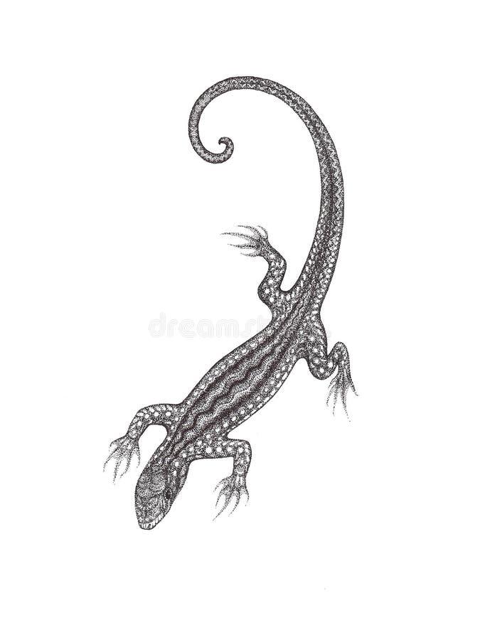 O lagarto tirado em um fundo branco ao estilo do pointilli ilustração royalty free