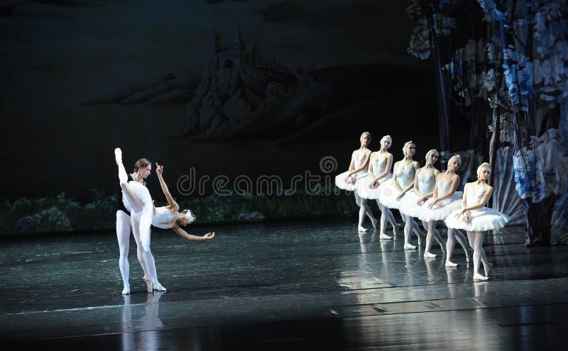 O lago é como um espelho- a maioria de cisne-bailado branco bonito O Lago das Cisnes imagens de stock