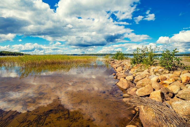 O lago coberto de vegetação com os juncos imagens de stock