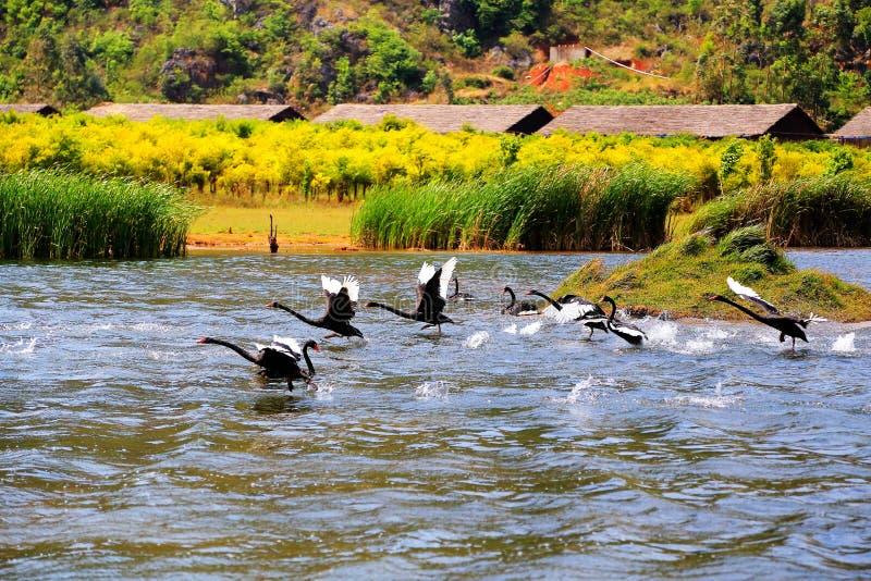 O Lago das Cisnes na área cênico de Puzhihe fotos de stock