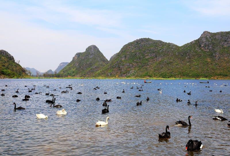 O Lago das Cisnes na área cênico de Puzhihe foto de stock royalty free