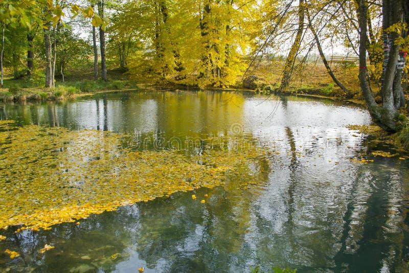 O lago do outono fotografia de stock royalty free