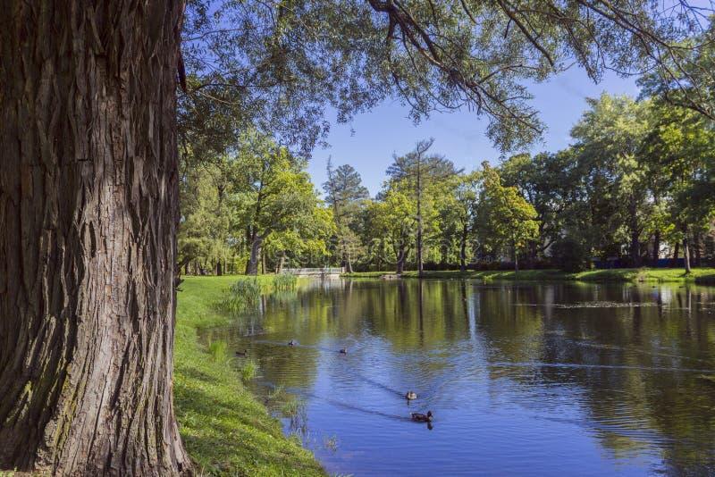 O lago no parque Autumn Landscape imagem de stock royalty free