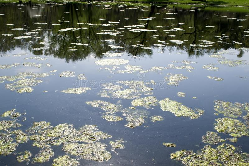 O lago obstruído é como um pântano O lago obstruído é como um pântano fotos de stock royalty free