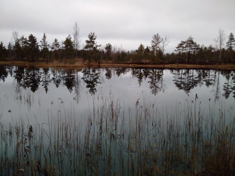 O lago pequeno na floresta imagem de stock