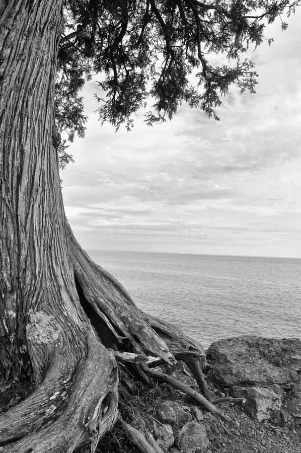 O Lago Superior Treescape fotografia de stock