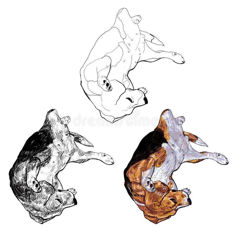 Download Pose engraçada do lebreiro ilustração stock. Ilustração de animal - 29826802