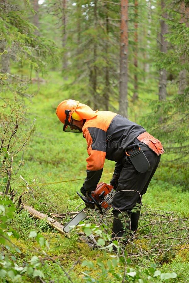 O lenhador corta a serra de cadeia da árvore do corte de ramos imagem de stock