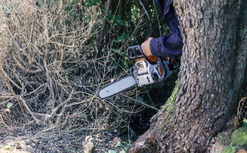 O lenhador corta o tronco com uma serra de cadeia imagem de stock